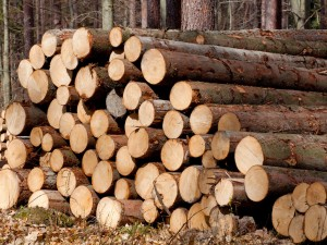 The Clun Log Company Open Day – 14th Sept 2016